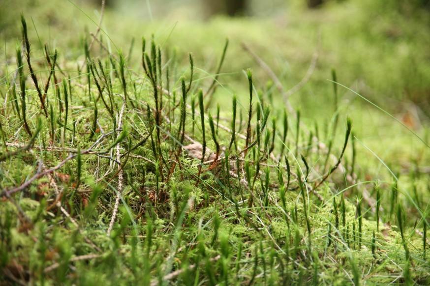 Sådan får du styr på mosset i din græsplæne